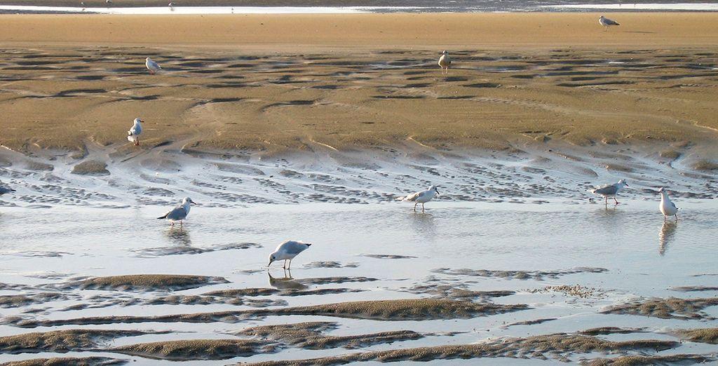 ... Ou le long des plages de Deauville