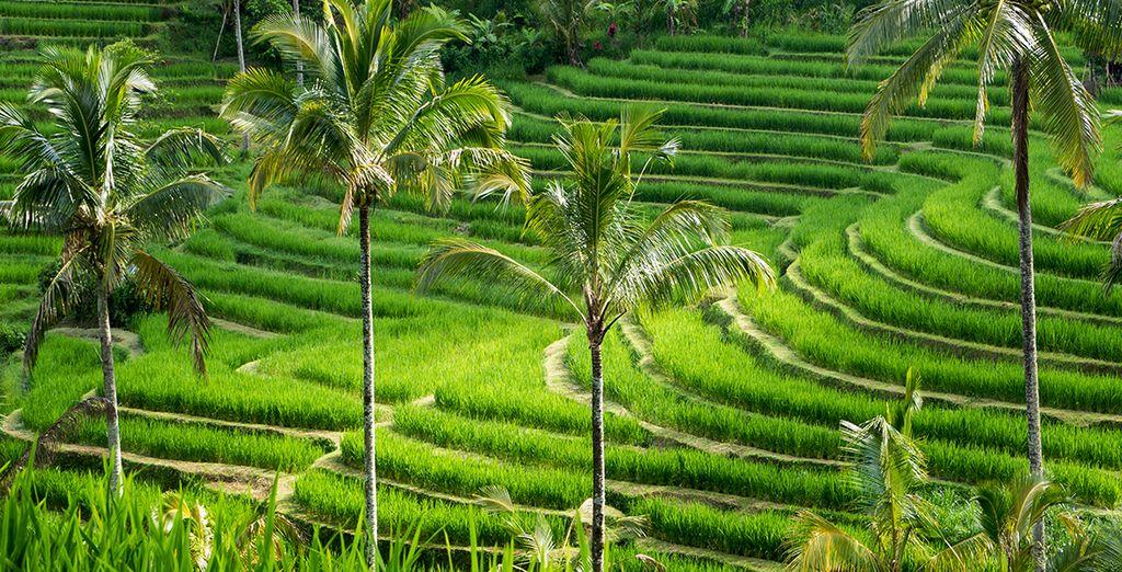 Au condensé de beautés de Bali