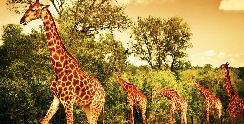 Et prolongez votre séjour en vivant un safari de rêve