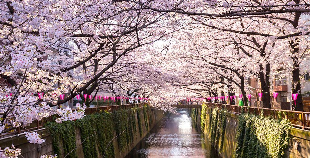 Balade romantique à Tokyo