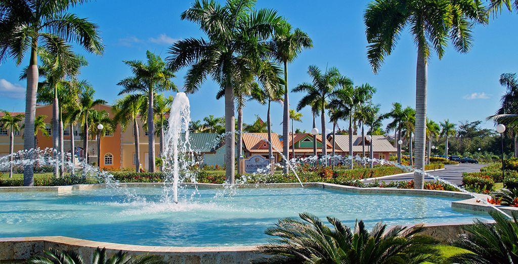 Les palmiers verdoyants, le ciel bleu azur...