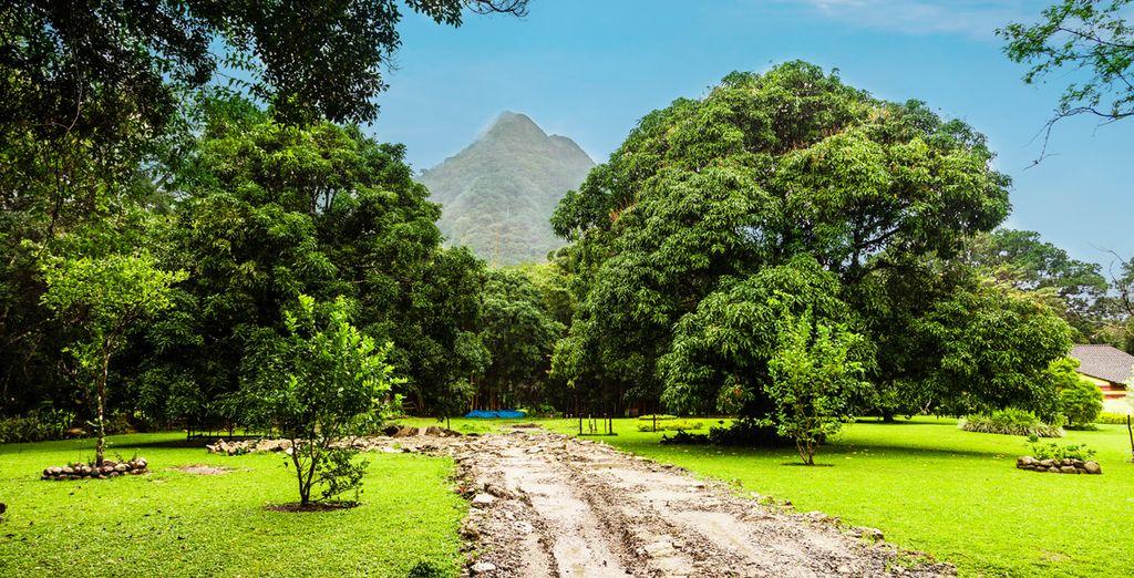 Forêts et nature autour de Panama City