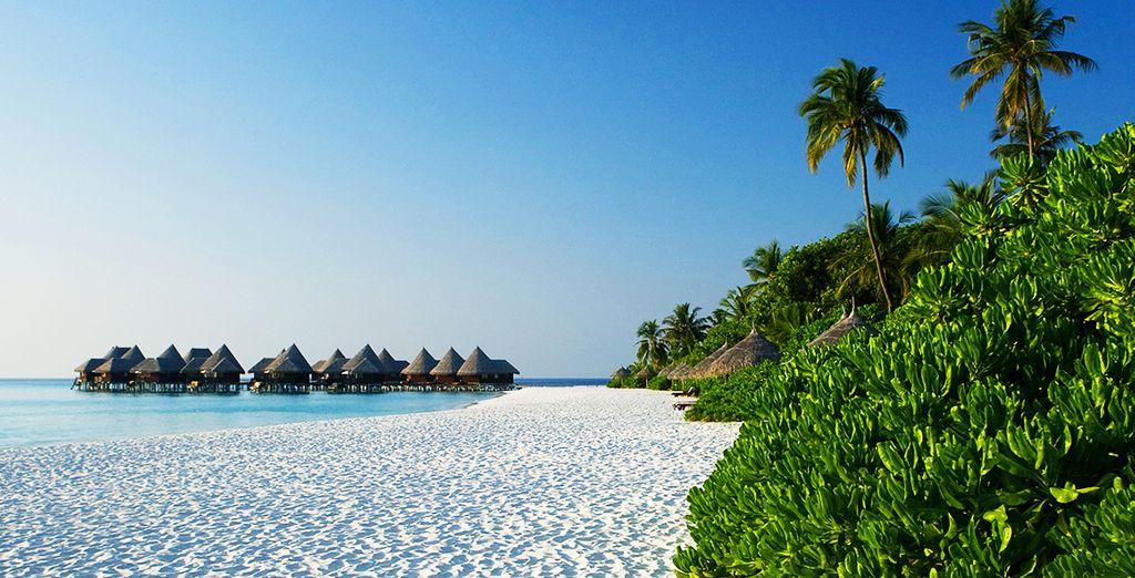 Les Maldives vont vous émerveiller !