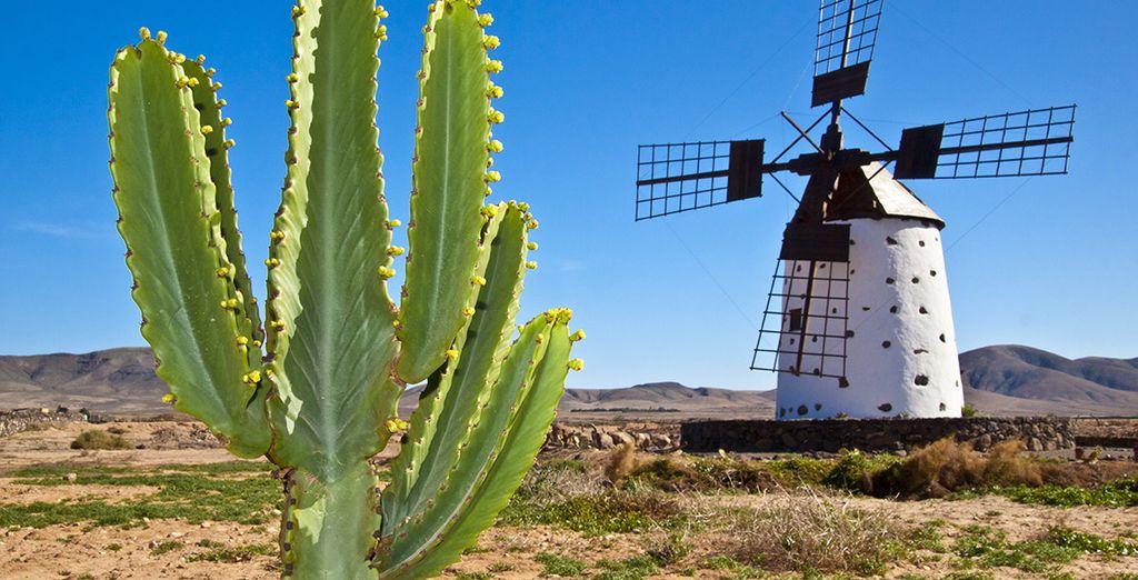 Vous allez adorer découvrir l'île de Fuerteventura...