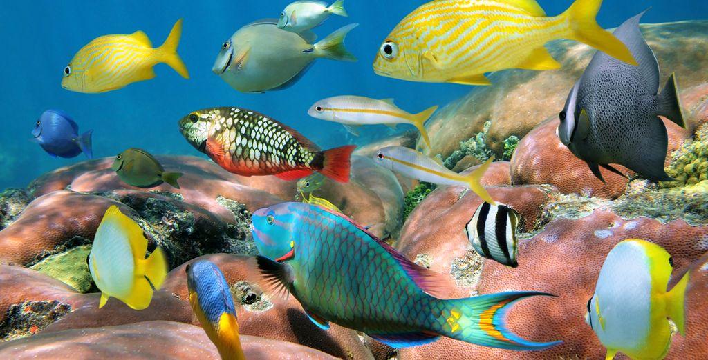 Découvrez une faune sous-marine exceptionnelle