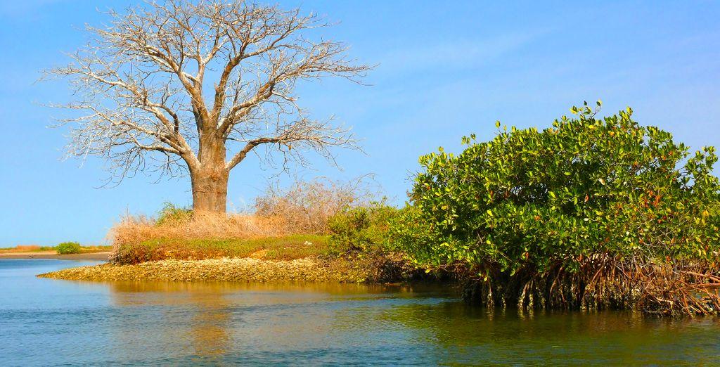 Voguez sur le delta du Sine Saloum