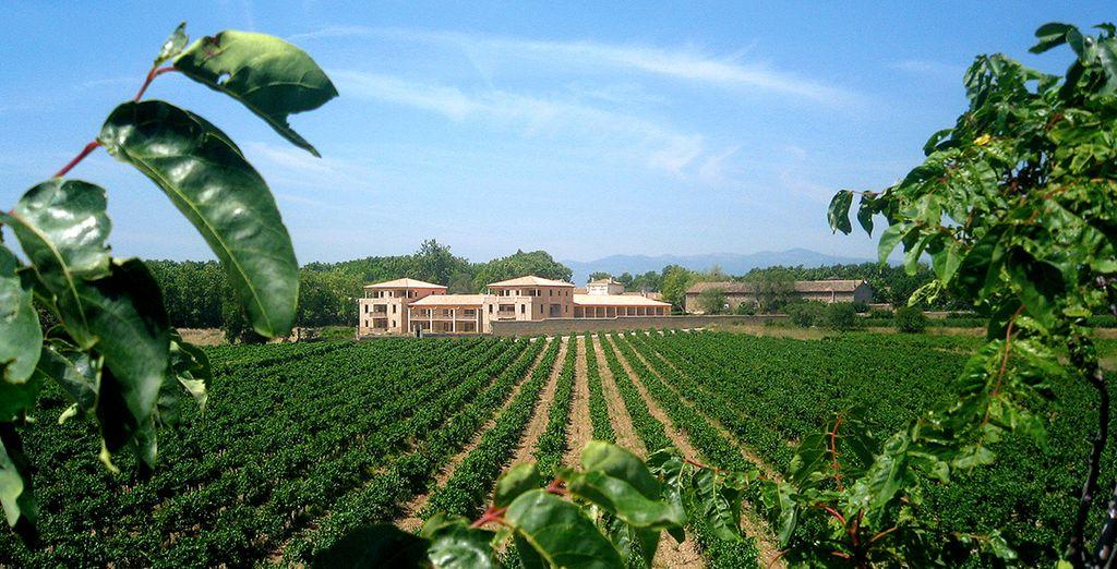 Nichée au cœur des vignes