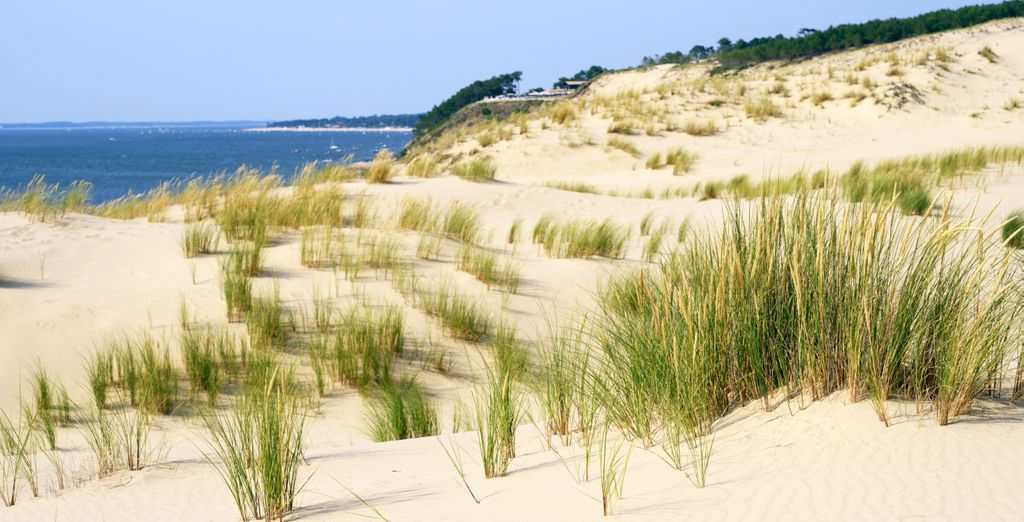 et visitez le Parc naturel Régional des Landes de Gascogne ?