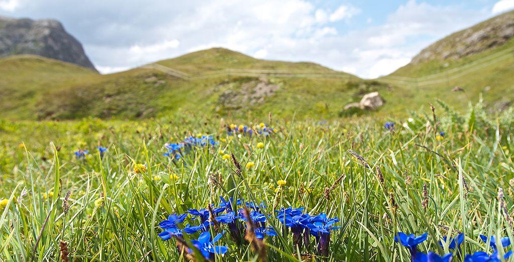 Respirez l'air pur de la montagne l'été