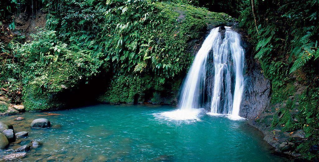 Une des nombreuses chutes d'eau magnifiques de Guadeloupe