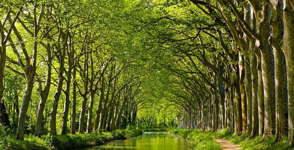 Sur le beau Canal du Midi