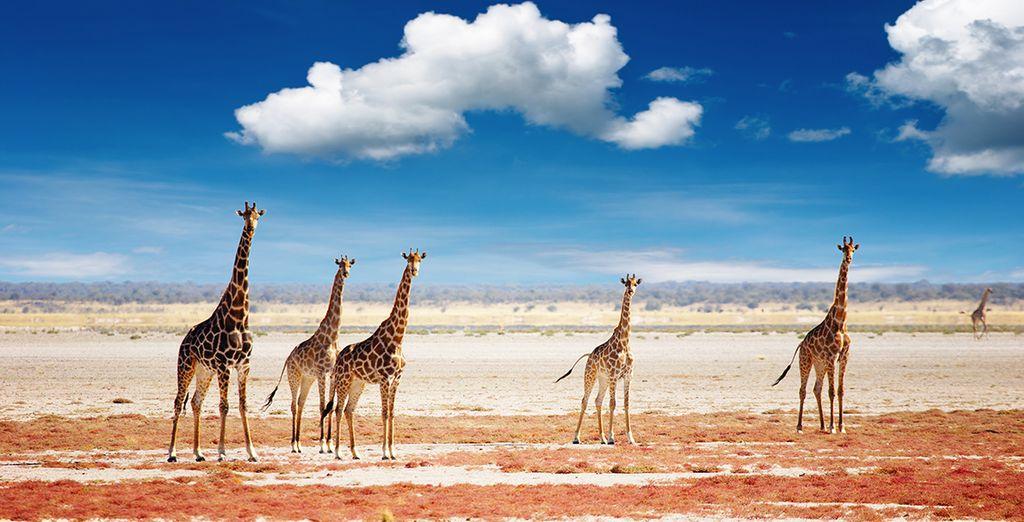 Extraordinaire Namibie en 13 nuits