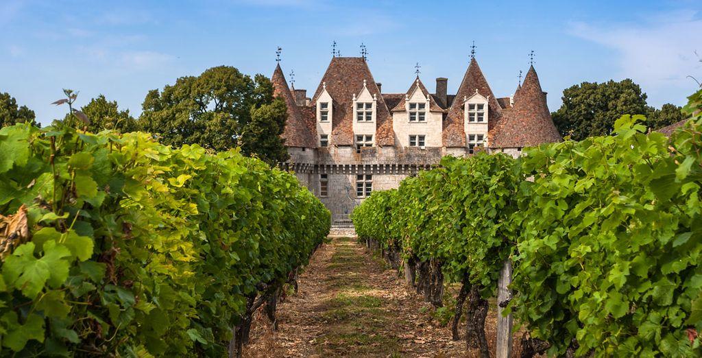 Et visite des vignobles...