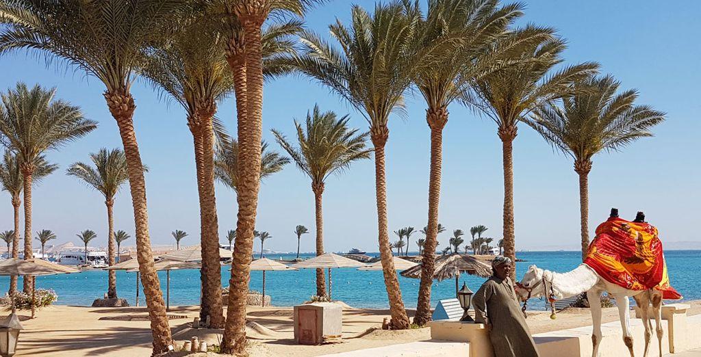 Partez à l'aventure et découvrez les mystères de l'Egypte !