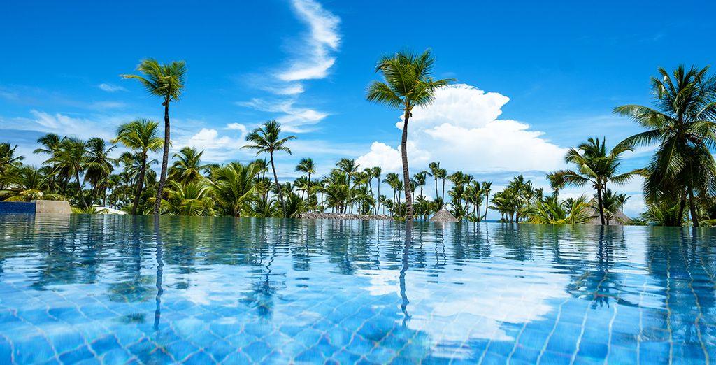 N'hésitez plus et plongez dans ce paradis exotique !