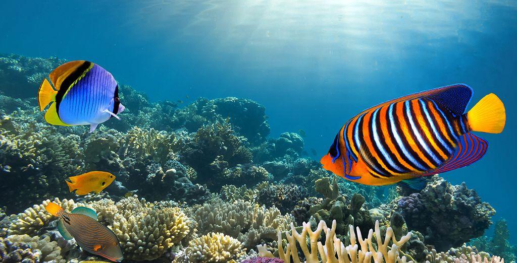 Ou sous les eaux turquoise de la mer Caraïbes