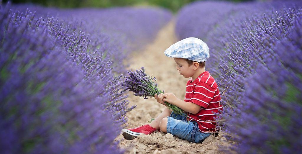 Au cœur des champs de lavande de la douce Provence...