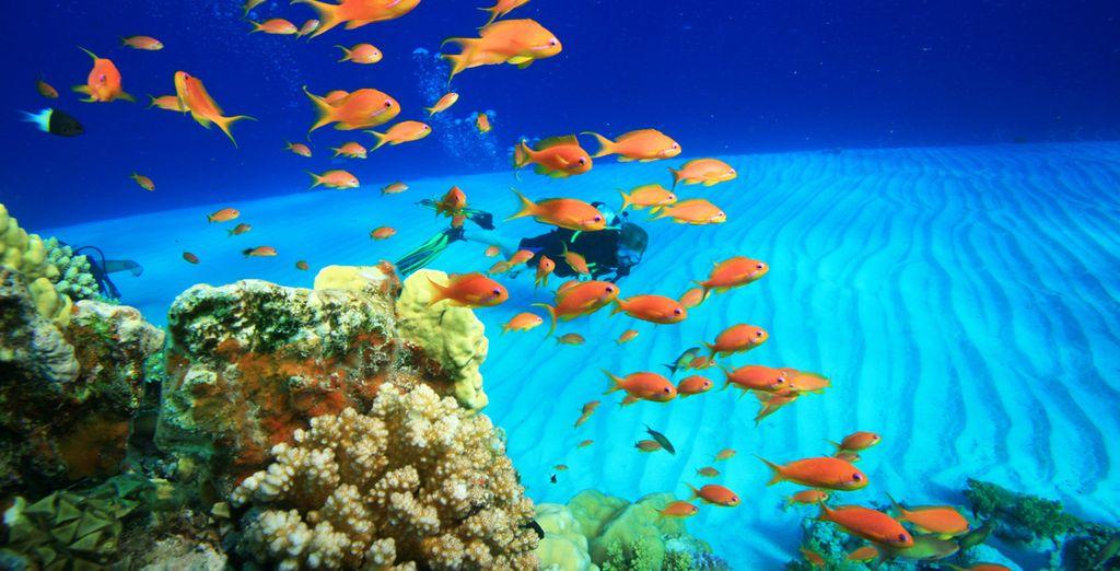 Et terminez en beauté votre combiné en explorant les fonds marins de la mer Rouge !