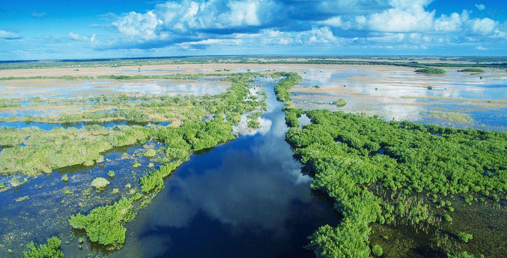 En passant par les Everglades...
