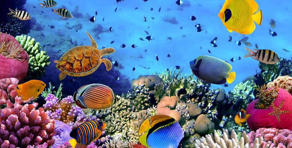 Tout en voguant dans les eaux turquoise des Caraibes...