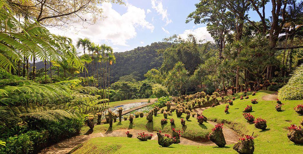 Paysages et vue panoramique sur les montagnes verdoyantes de Martinique