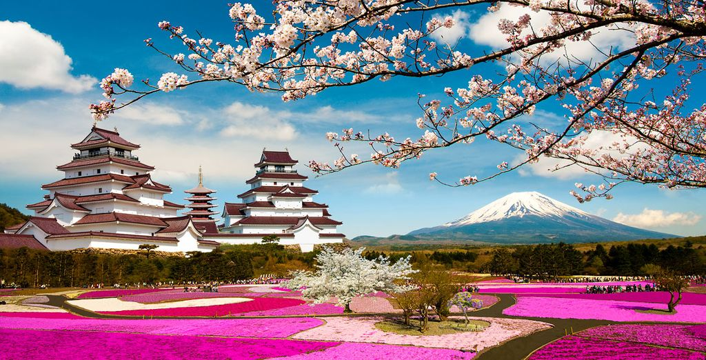 Photographie du Japon, montagnes, champs de fleurs et temples