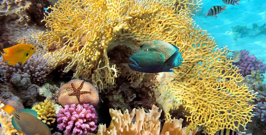 Découvrez les fonds marins de Punta Cana