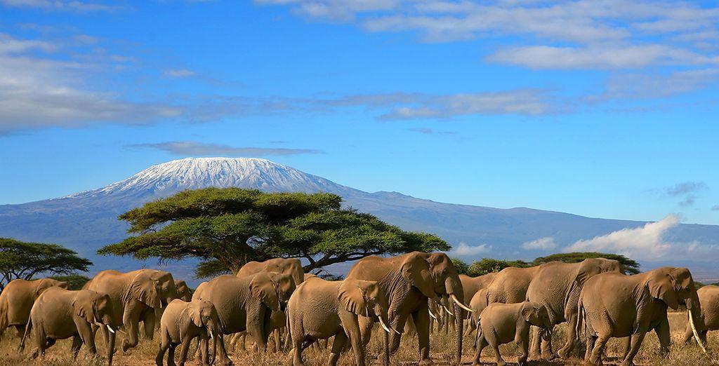 Découvrez les animaux sauvages de Tanzanie