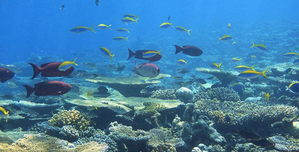 Plongez à la rencontre de la splendeur des fonds marins