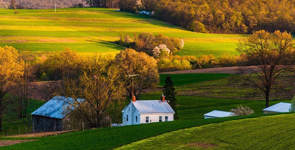 Sur les terres Amish !
