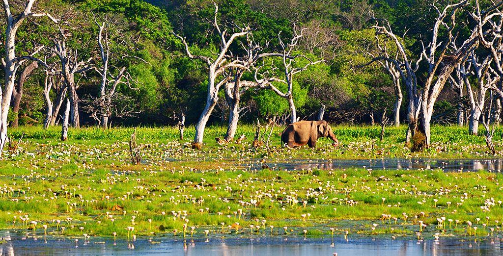 Le Sri Lanka vous ouvre ses portes