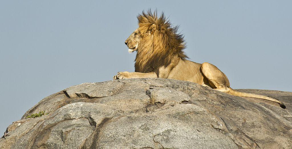 Où les animaux sont rois