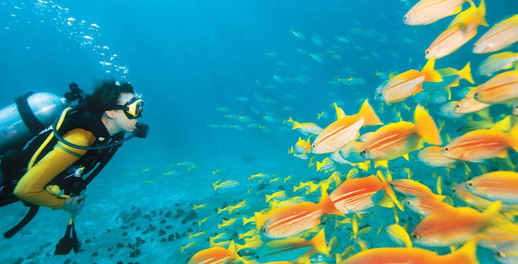 Sous l'eau...