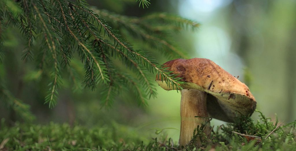 Partez faire les champignons à l'automne