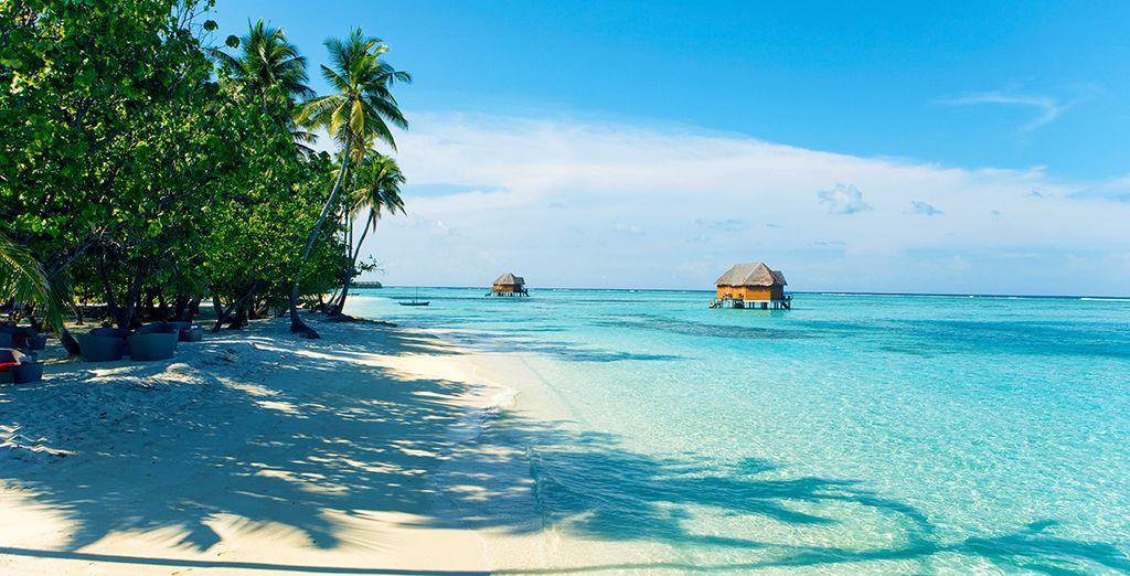Vous rêvez déjà de ce magnifique lagon ?