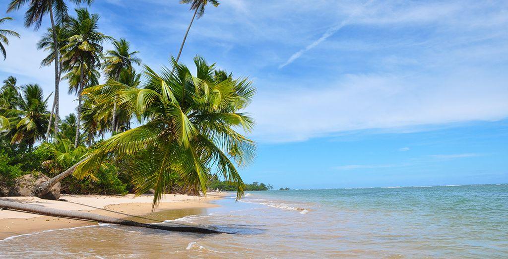 Prenez ensuite la direction de Salavador de Bahia