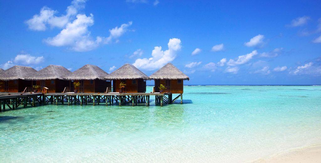 Suivez-nous sur l'île de Meerufenfushi
