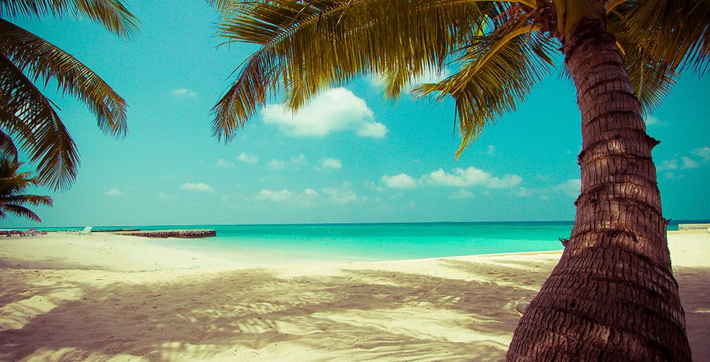 Vous vous évaderez en tout confort sur ce petit coin de paradis