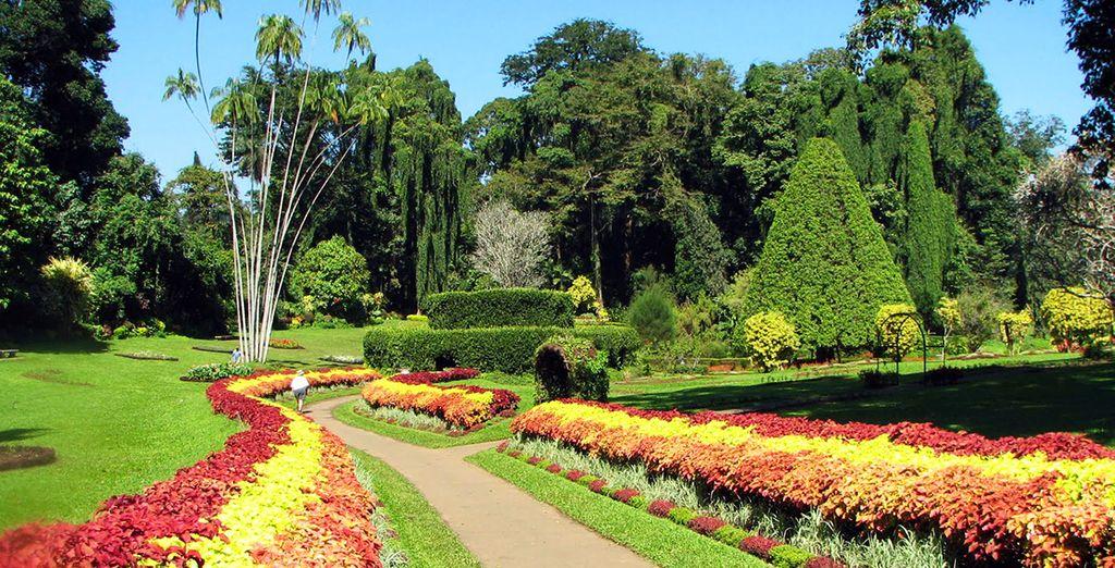 Et de vous émerveiller devant les espèces rares du jardin botanique de Peradeniva