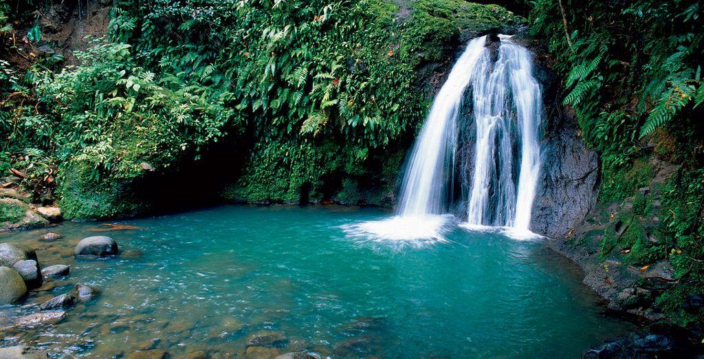 De la Guadeloupe