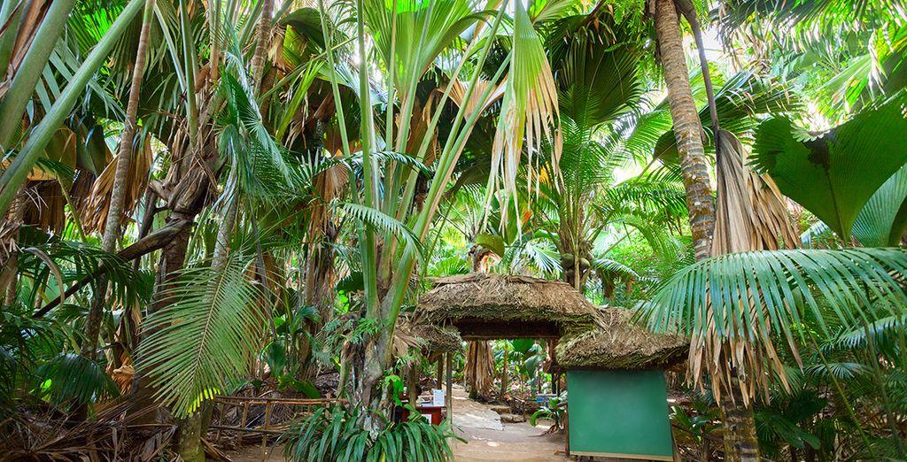 Profitez-en également pour visiter la Vallée de Mai, véritable jardin d'Eden