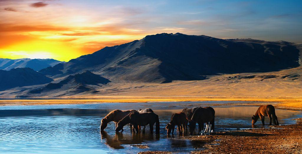 Circuit Mongolie écoresponsable