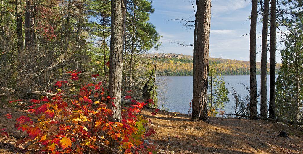 Les vastes forêts qui bordent le lac Saint-Jean