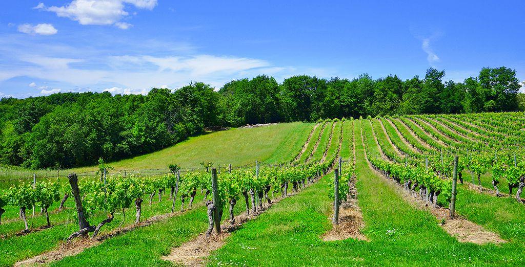 Vous apprécierez également les alentours de votre yourte et la proximité des vignes du Medhoc