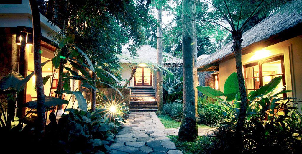 Vous débuterez votre séjour à Ubud, au bord de la vallée de la rivière Ayung