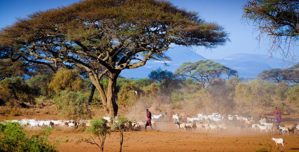 Depuis le splendide parc Amboseli