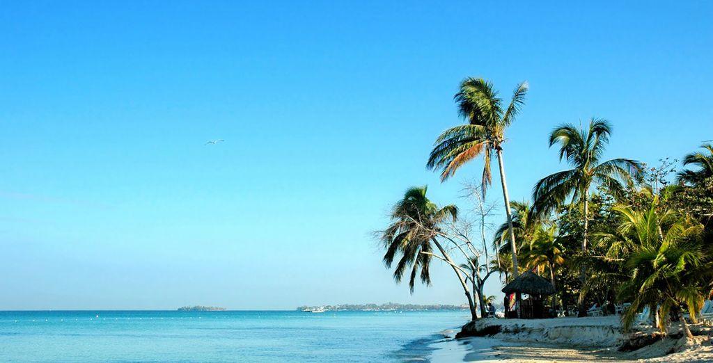 Bon séjour en Jamaïque !