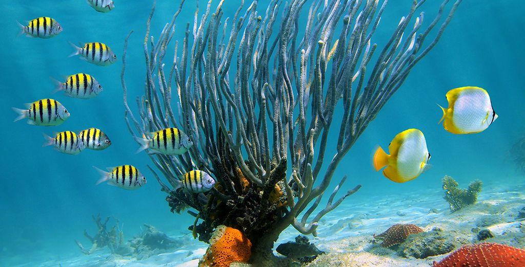 Et explorez la richesse des fonds marins