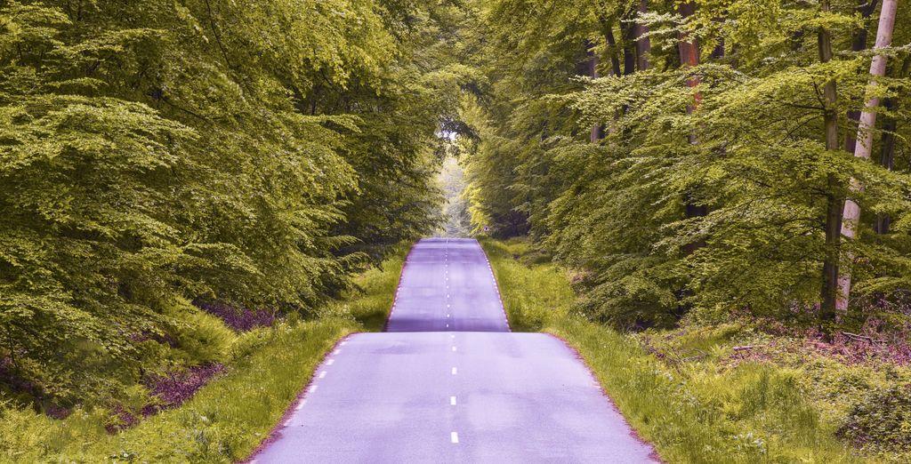 Empruntez ensuite l'une des verdoyantes routes longeant la fôret
