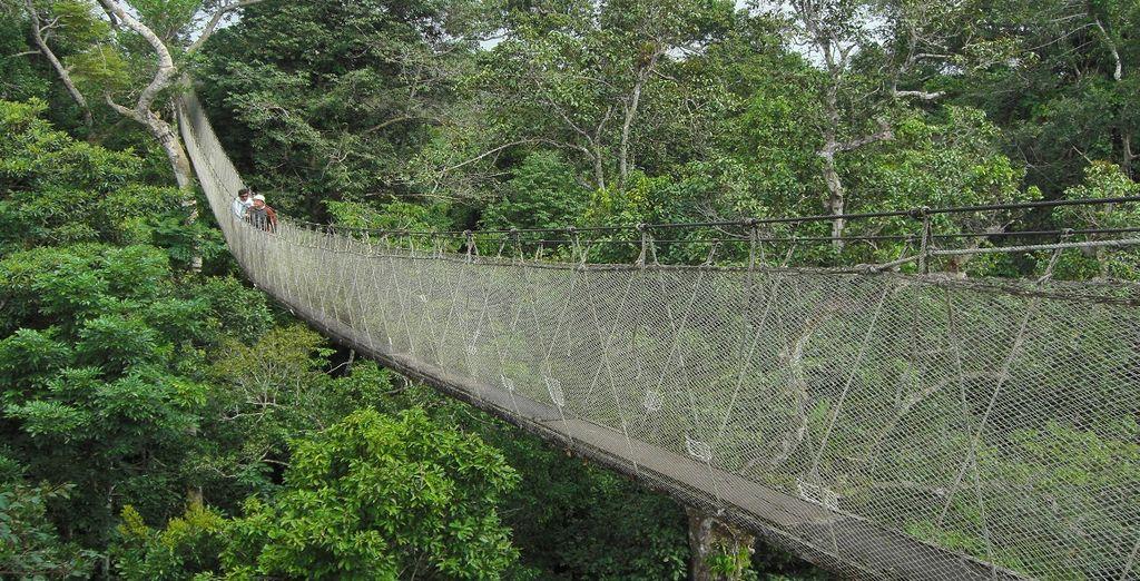 Il famoso Canopy Wakway Malesia, uno dei ponti a corde più lunghi al mondo